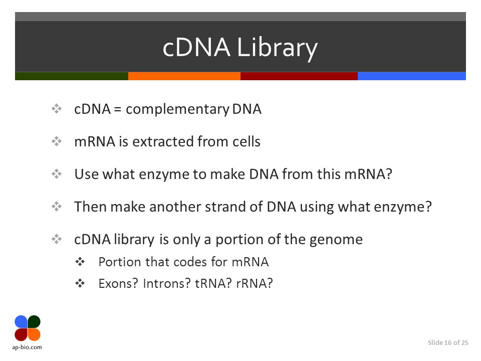 cDNA Library cDNA = complementary DNA mRNA is extracted from cells