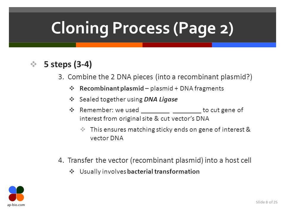 Cloning Process (Page 2)