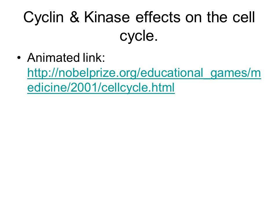 Cyclin & Kinase effects on the cell cycle.