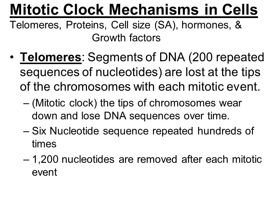Mitotic Clock Mechanisms in Cells Telomeres, Proteins, Cell size (SA), hormones, & Growth factors
