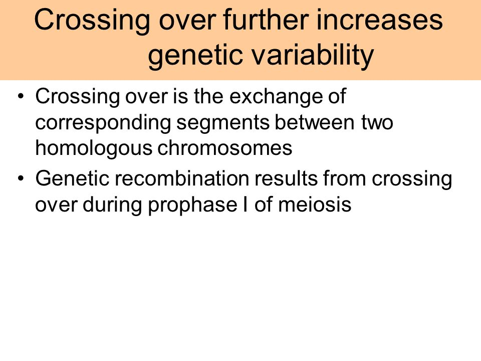 Crossing over further increases genetic variability