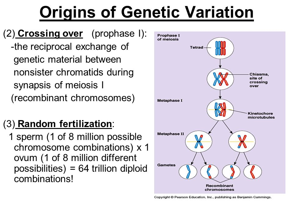 Origins of Genetic Variation