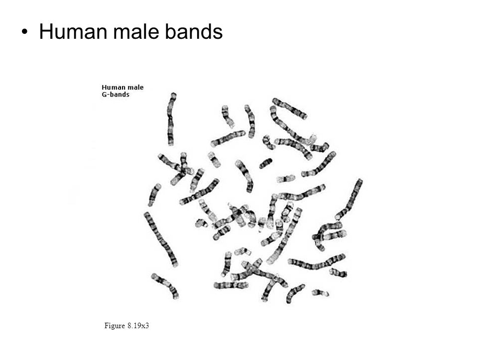 Human male bands Figure 8.19x3