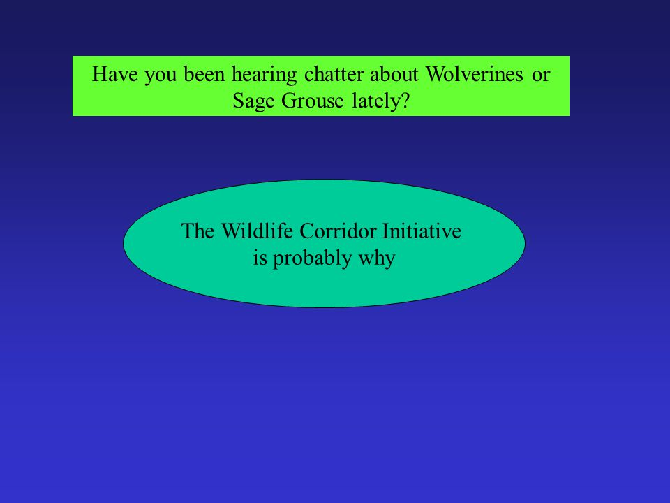 Have you been hearing chatter about Wolverines or Sage Grouse lately