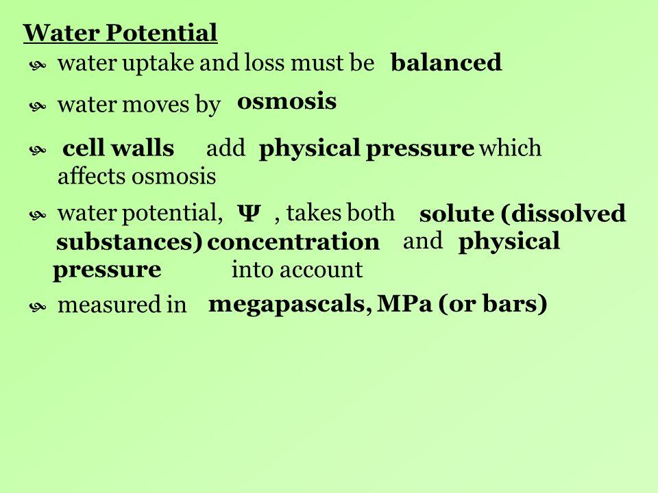 Water Potential water uptake and loss must be. balanced. water moves by. osmosis.