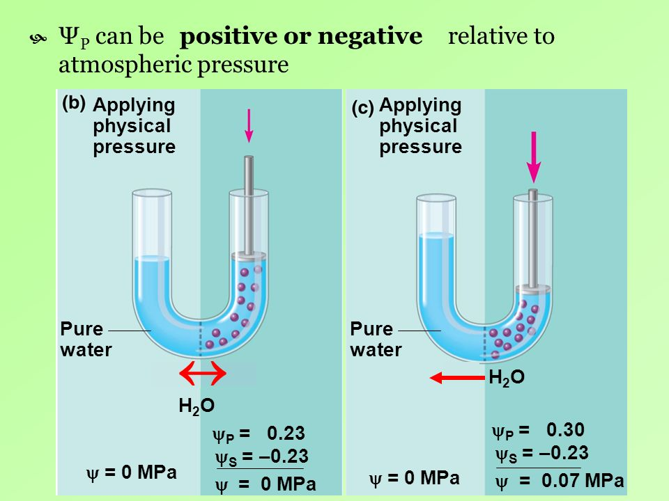  ΨP can be relative to atmospheric pressure positive or negative