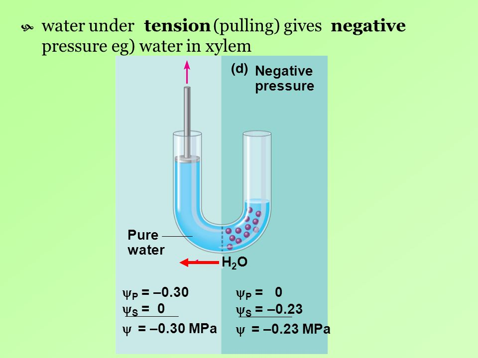 water under (pulling) gives pressure eg) water in xylem tension