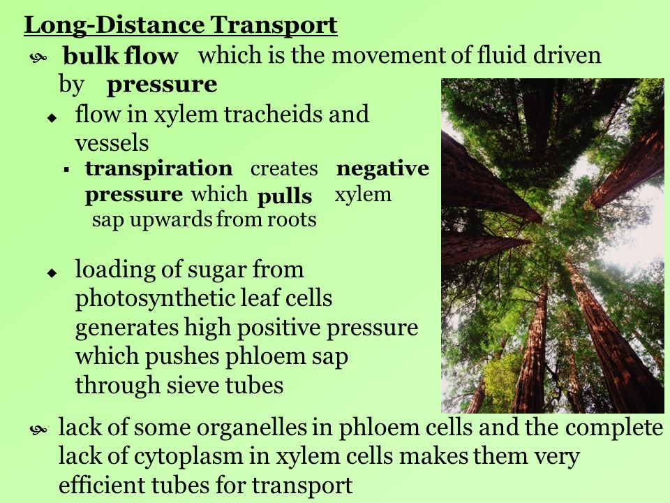 Long-Distance Transport which is the movement of fluid driven by