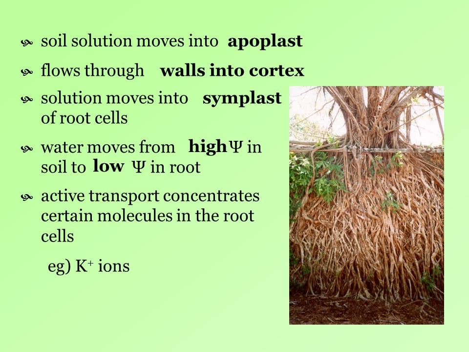 soil solution moves into
