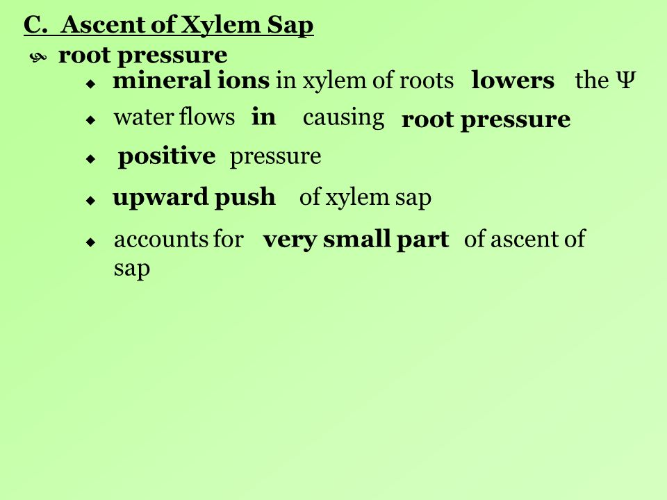 C. Ascent of Xylem Sap root pressure. in xylem of roots the Ψ. mineral ions.