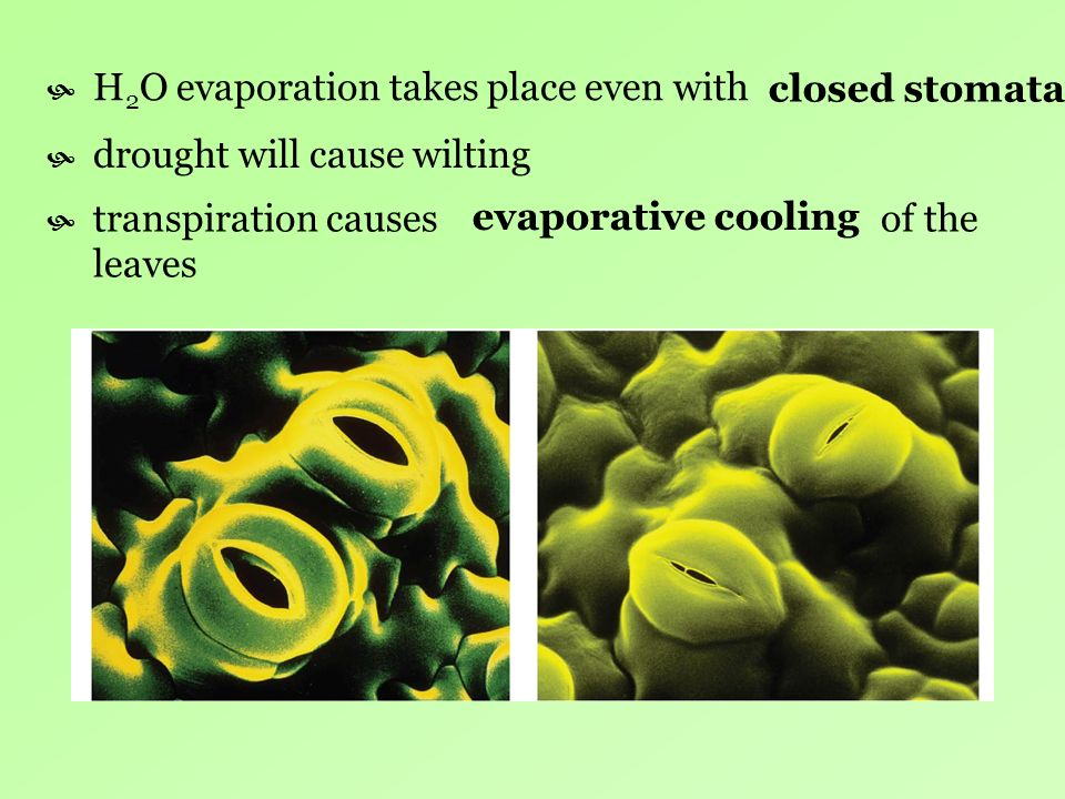 H2O evaporation takes place even with