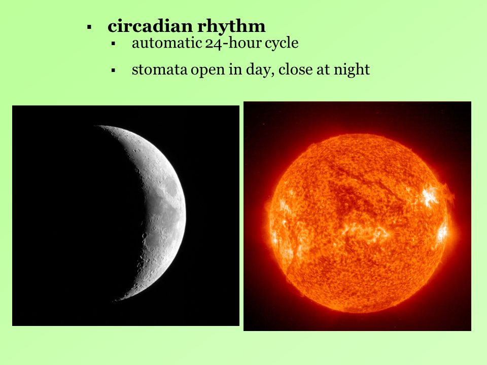 circadian rhythm automatic 24-hour cycle