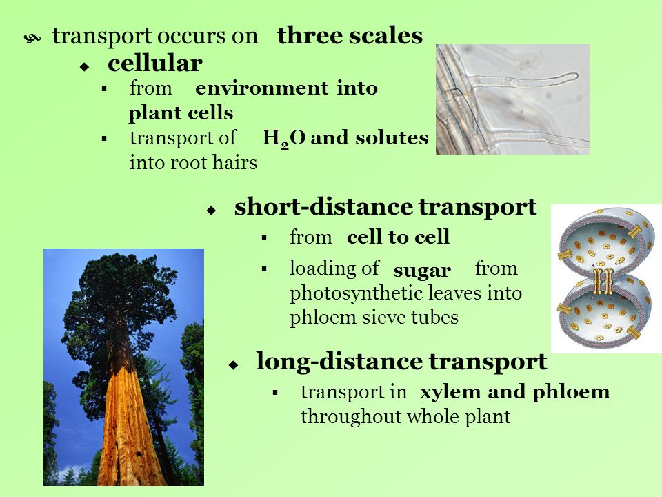 short-distance transport