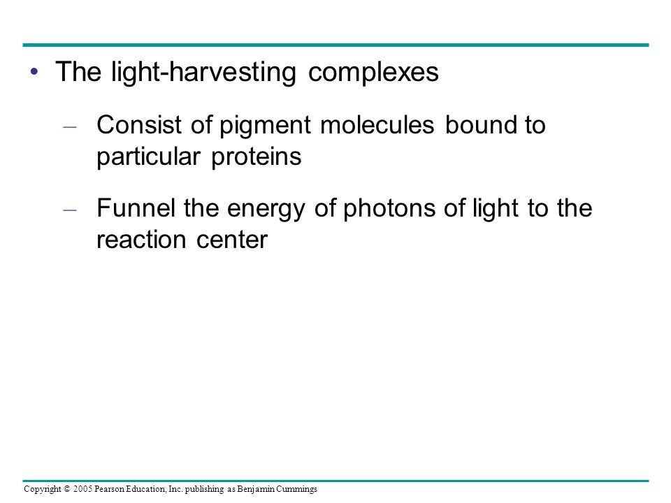 The light-harvesting complexes