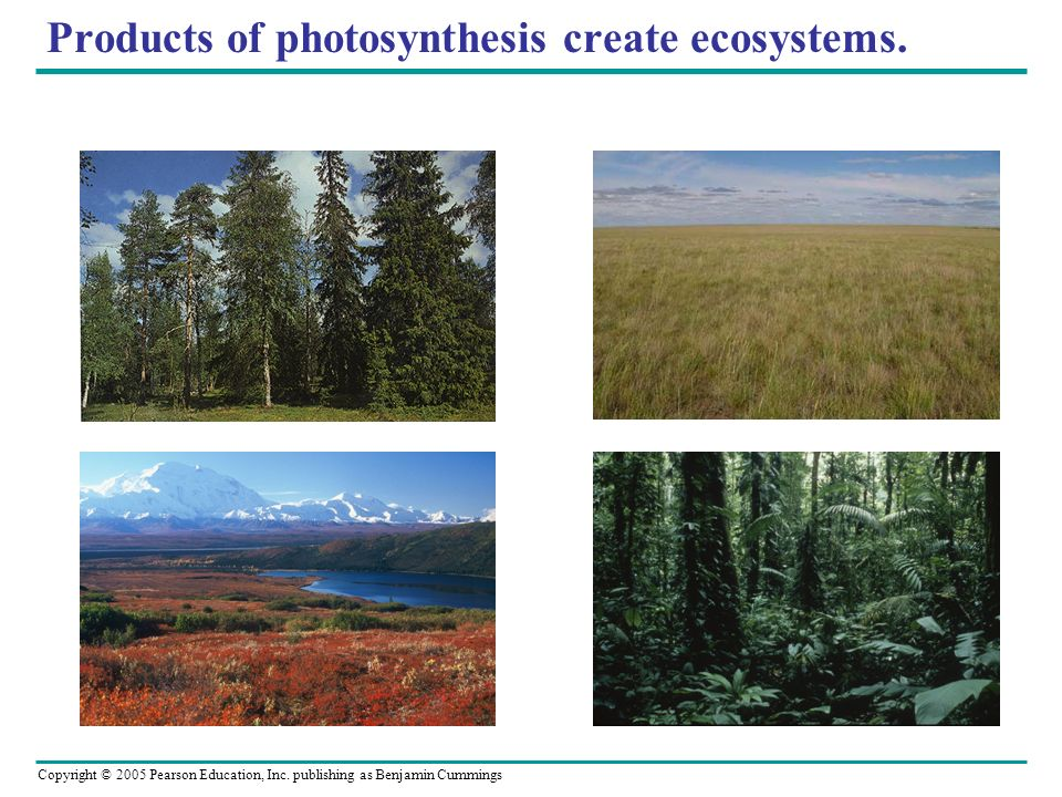 Products of photosynthesis create ecosystems.