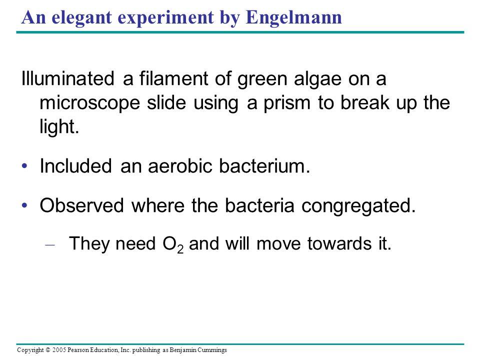 An elegant experiment by Engelmann