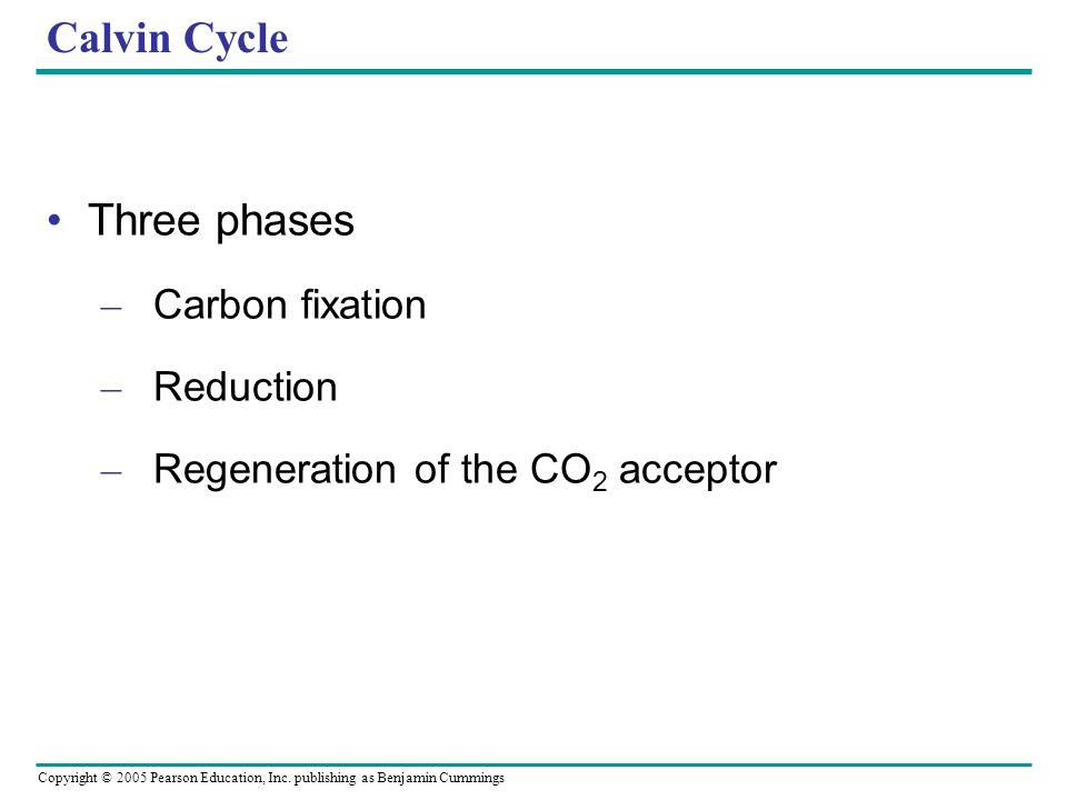 Calvin Cycle Three phases Carbon fixation Reduction