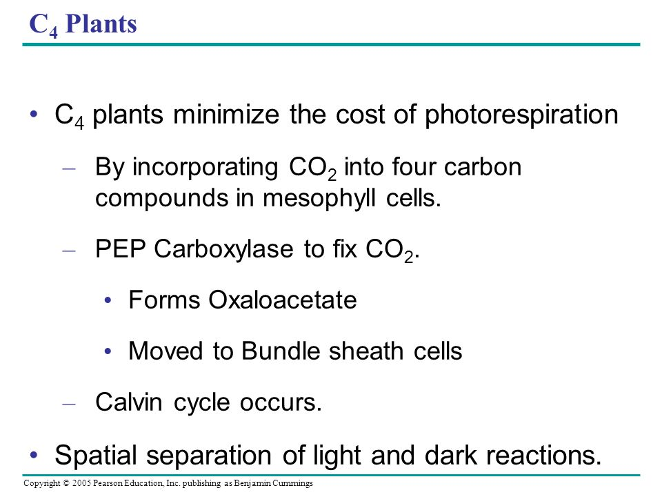 C4 plants minimize the cost of photorespiration