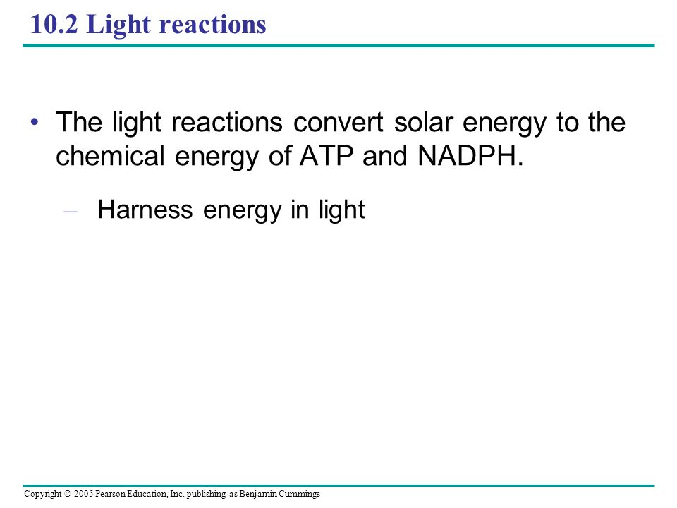 10.2 Light reactions The light reactions convert solar energy to the chemical energy of ATP and NADPH.