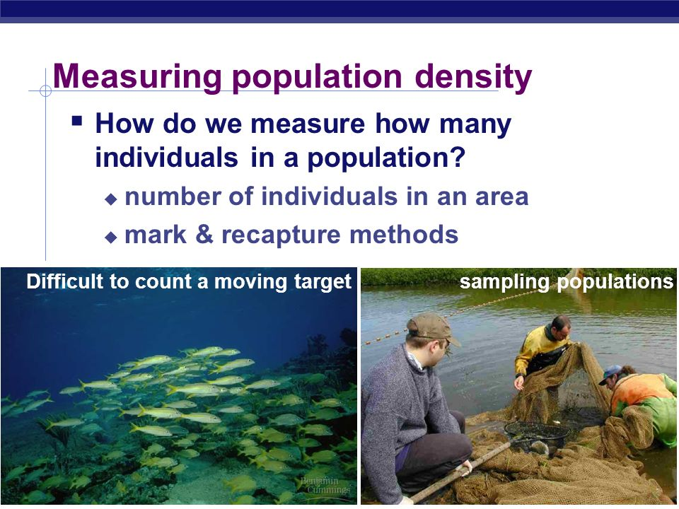 Measuring population density