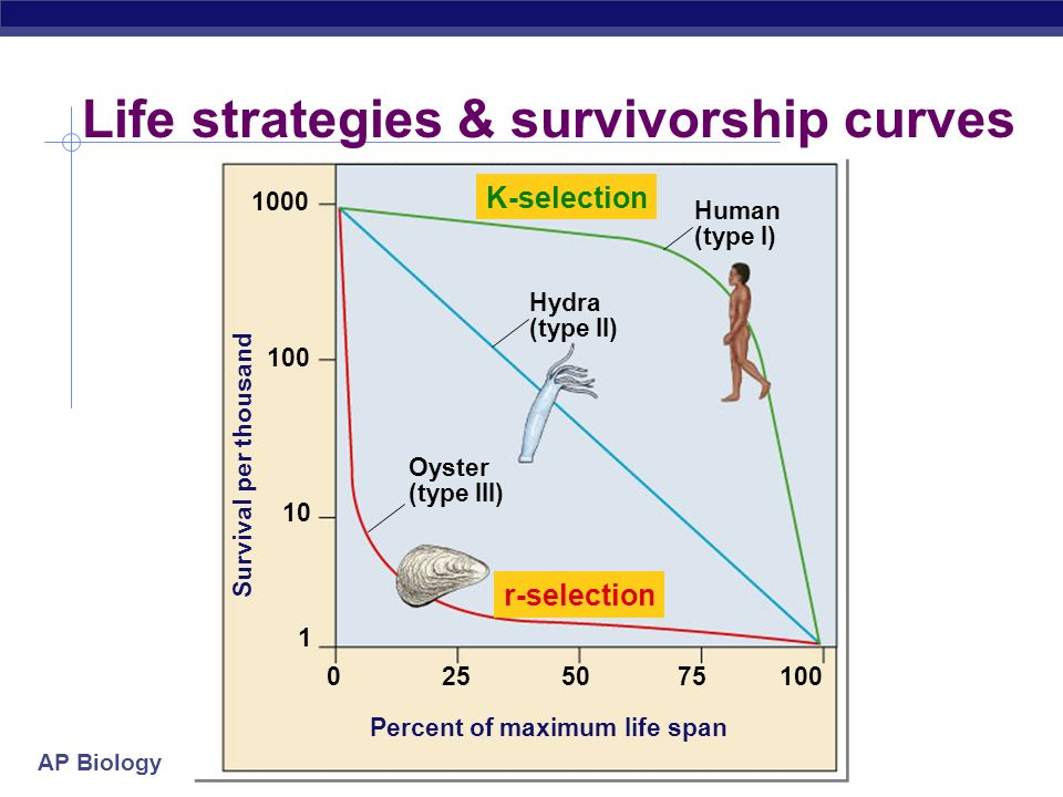 Life strategies & survivorship curves