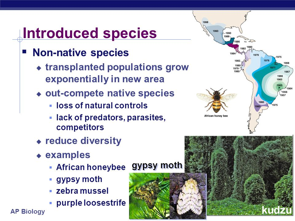 Introduced species Non-native species kudzu