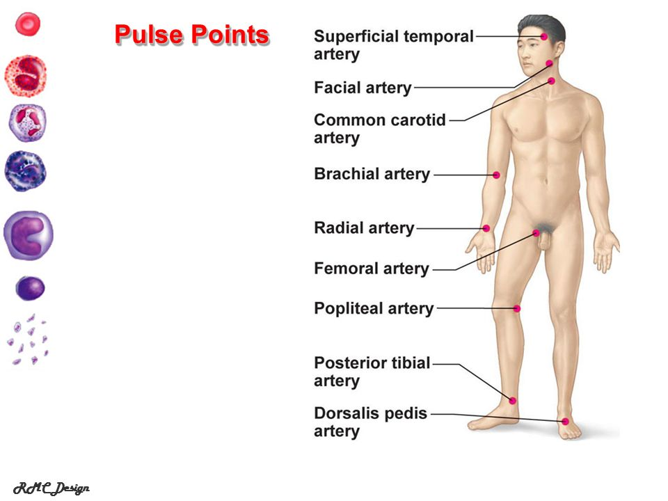 Pulse Points RMC Design