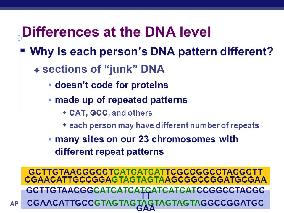 Differences at the DNA level