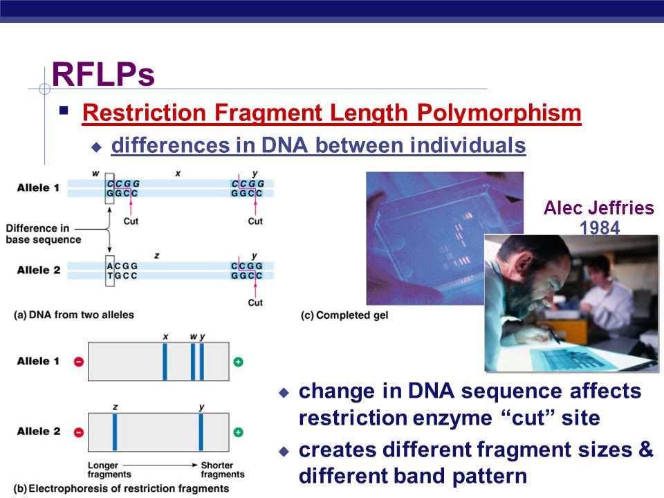 RFLPs Restriction Fragment Length Polymorphism