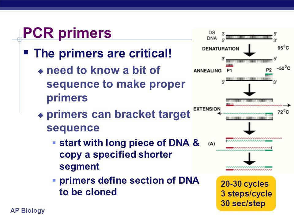 PCR primers The primers are critical!