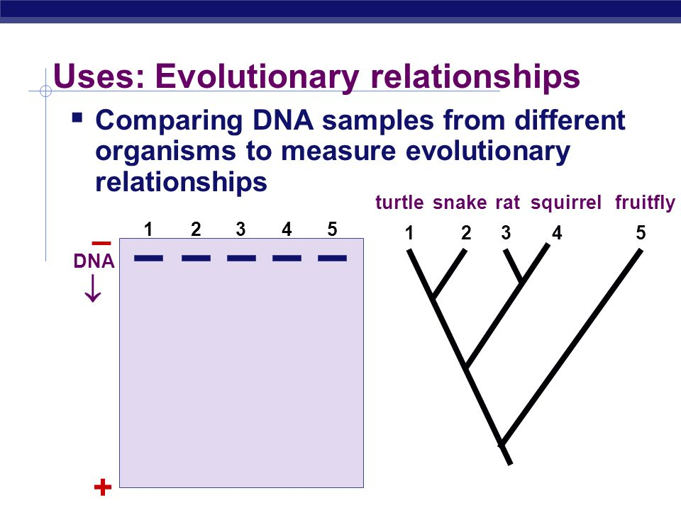 Uses: Evolutionary relationships