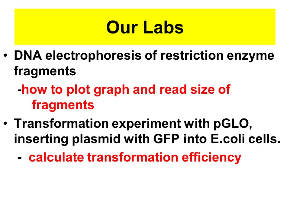 Our Labs DNA electrophoresis of restriction enzyme fragments