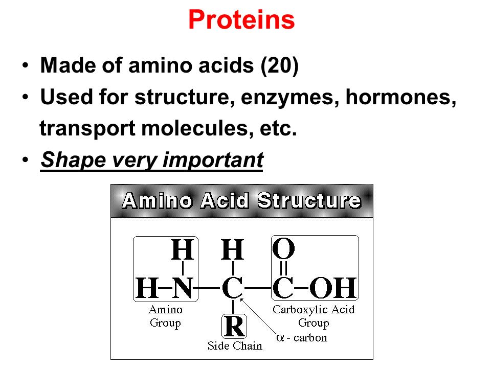 Proteins Made of amino acids (20)