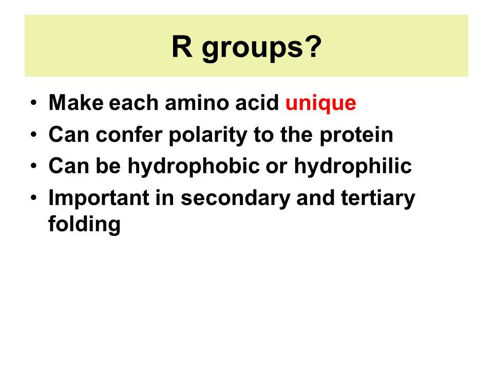 R groups Make each amino acid unique