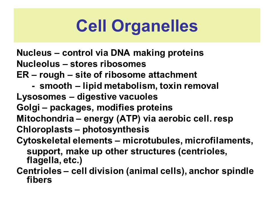 Cell Organelles Nucleus – control via DNA making proteins
