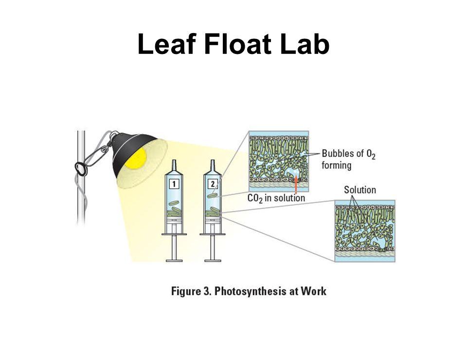 Leaf Float Lab
