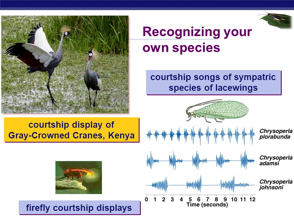 Recognizing your own species
