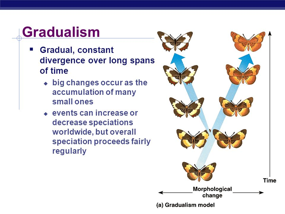 Gradualism Gradual, constant divergence over long spans of time