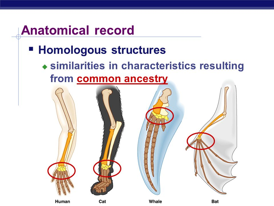 Anatomical record Homologous structures