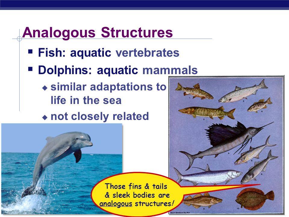 & sleek bodies are analogous structures!