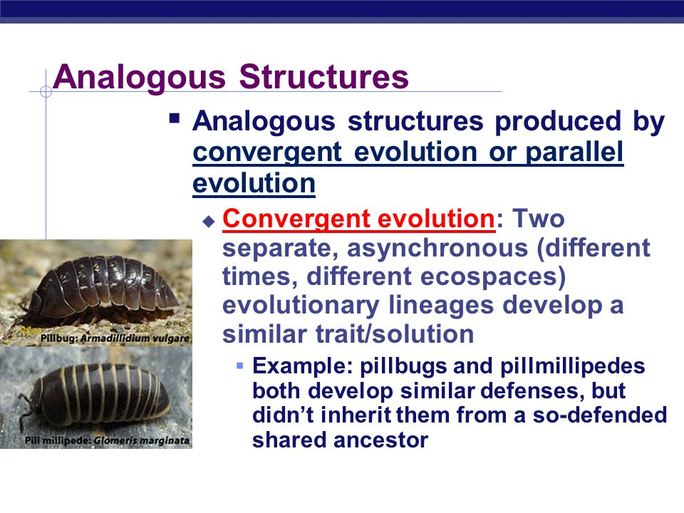 Analogous Structures Analogous structures produced by convergent evolution or parallel evolution.