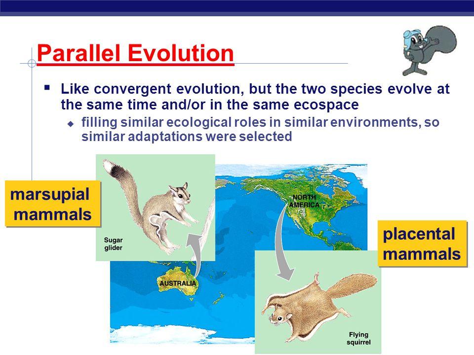 Parallel Evolution marsupial mammals placental mammals