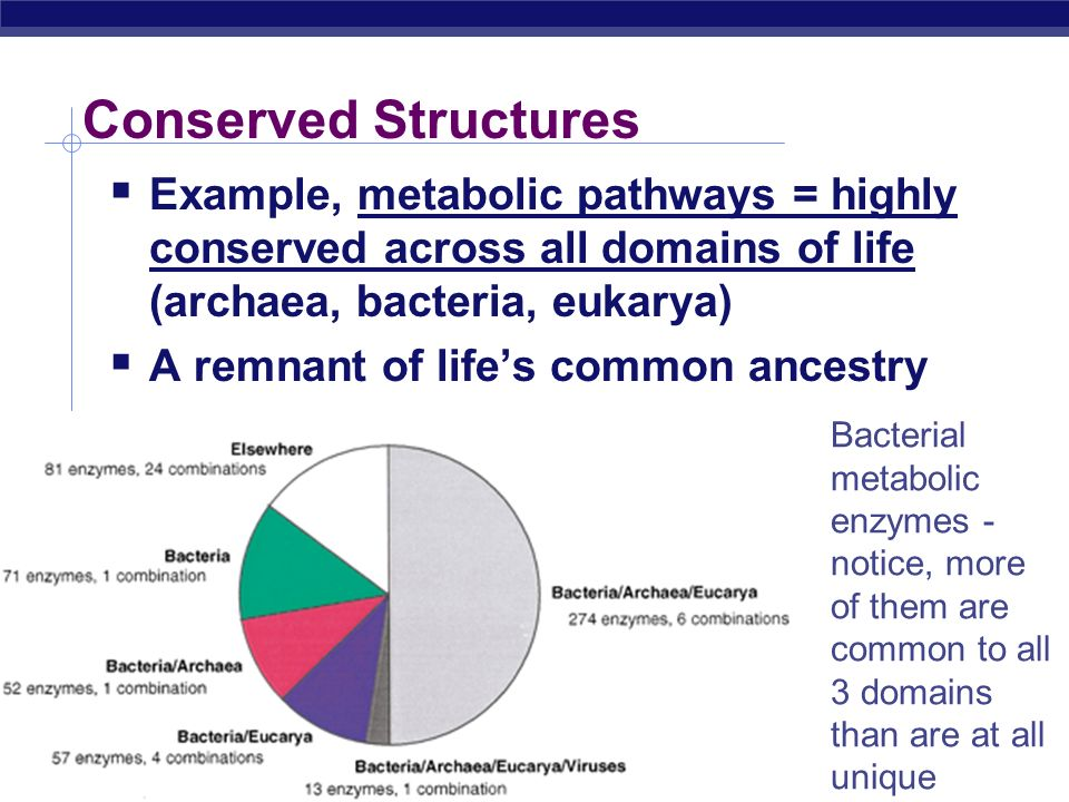Conserved Structures Example, metabolic pathways = highly conserved across all domains of life (archaea, bacteria, eukarya)