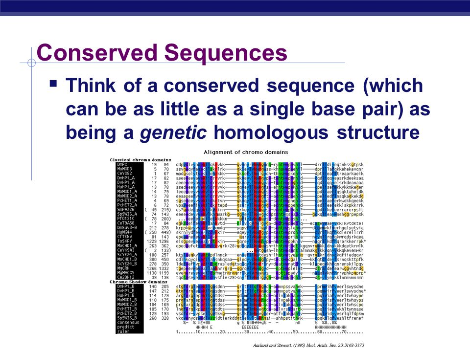 Conserved Sequences Think of a conserved sequence (which can be as little as a single base pair) as being a genetic homologous structure.