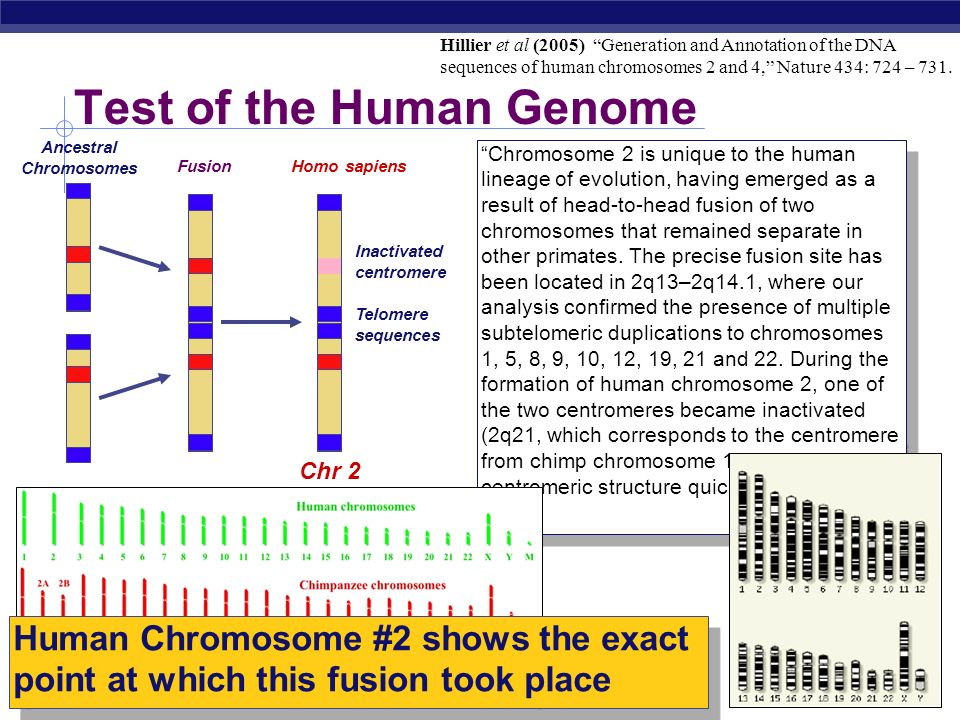 Test of the Human Genome