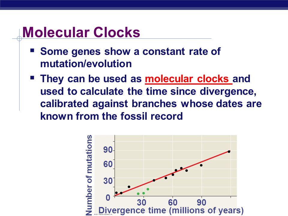 Molecular Clocks Some genes show a constant rate of mutation/evolution