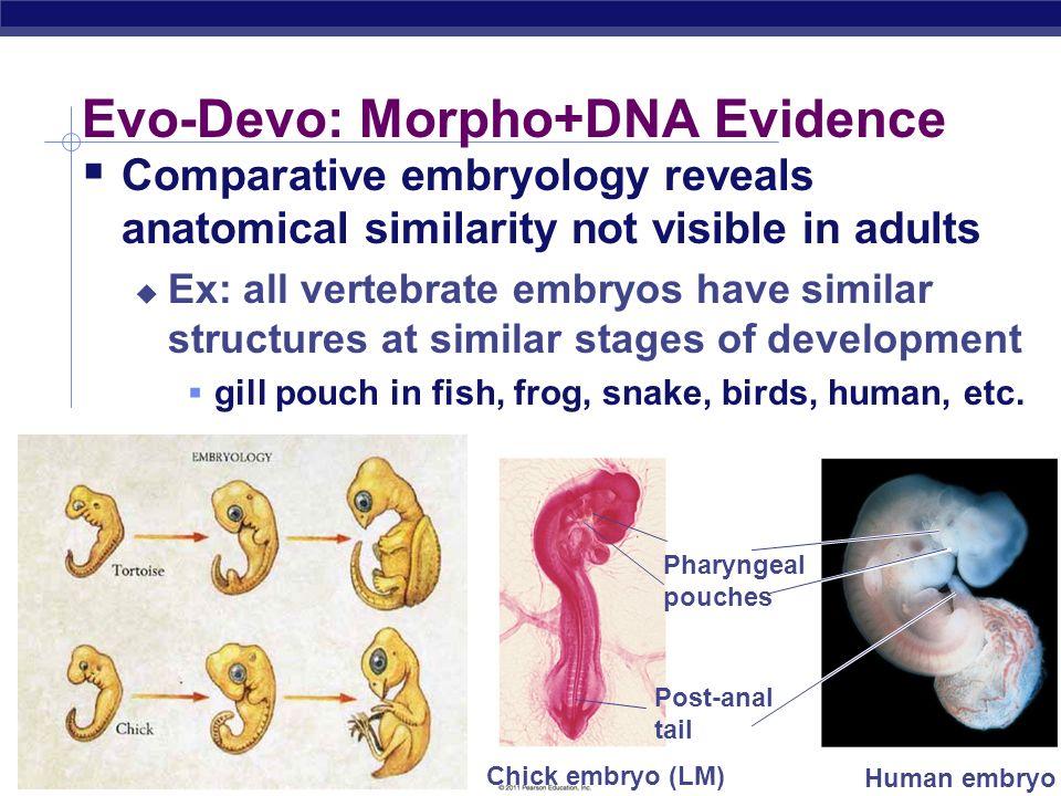 Evo-Devo: Morpho+DNA Evidence
