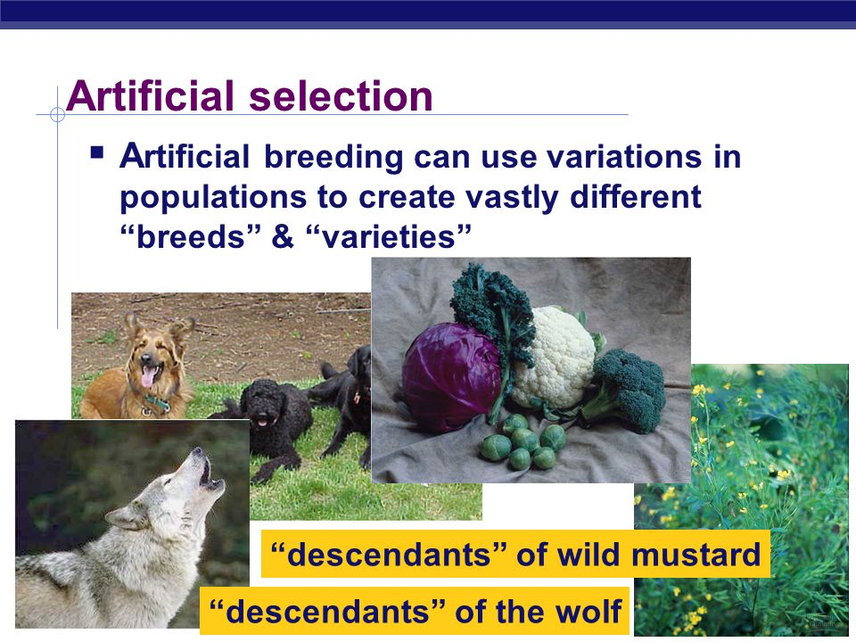 descendants of wild mustard descendants of the wolf
