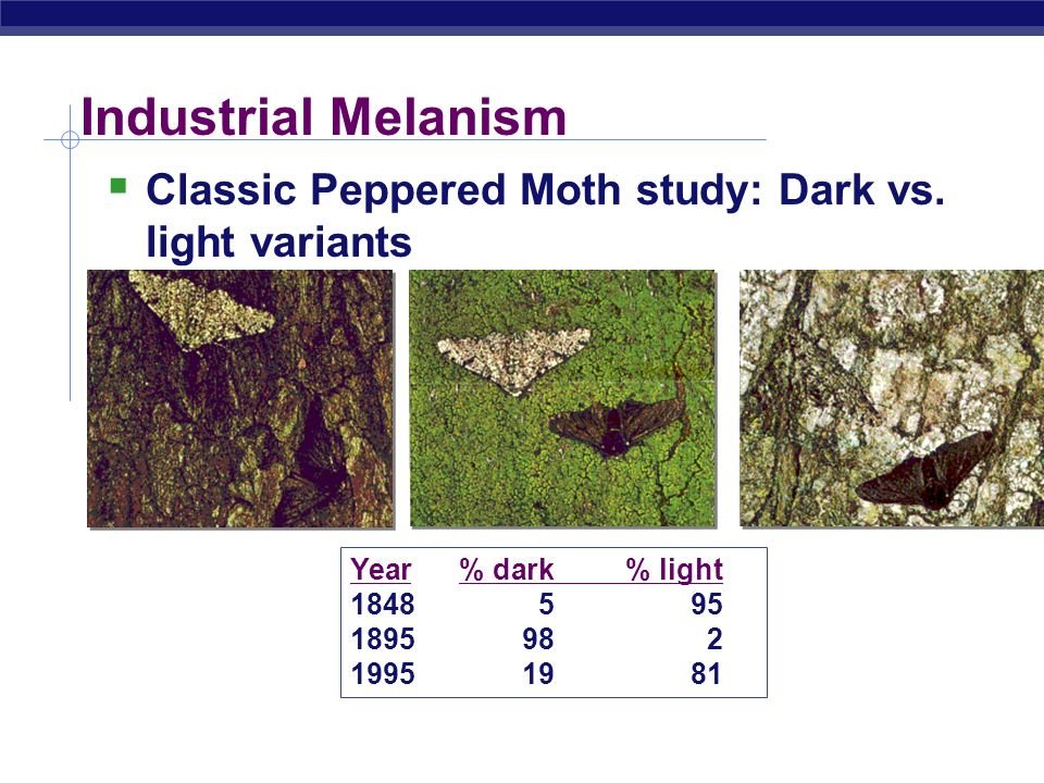Industrial Melanism Classic Peppered Moth study: Dark vs. light variants. Year % dark % light