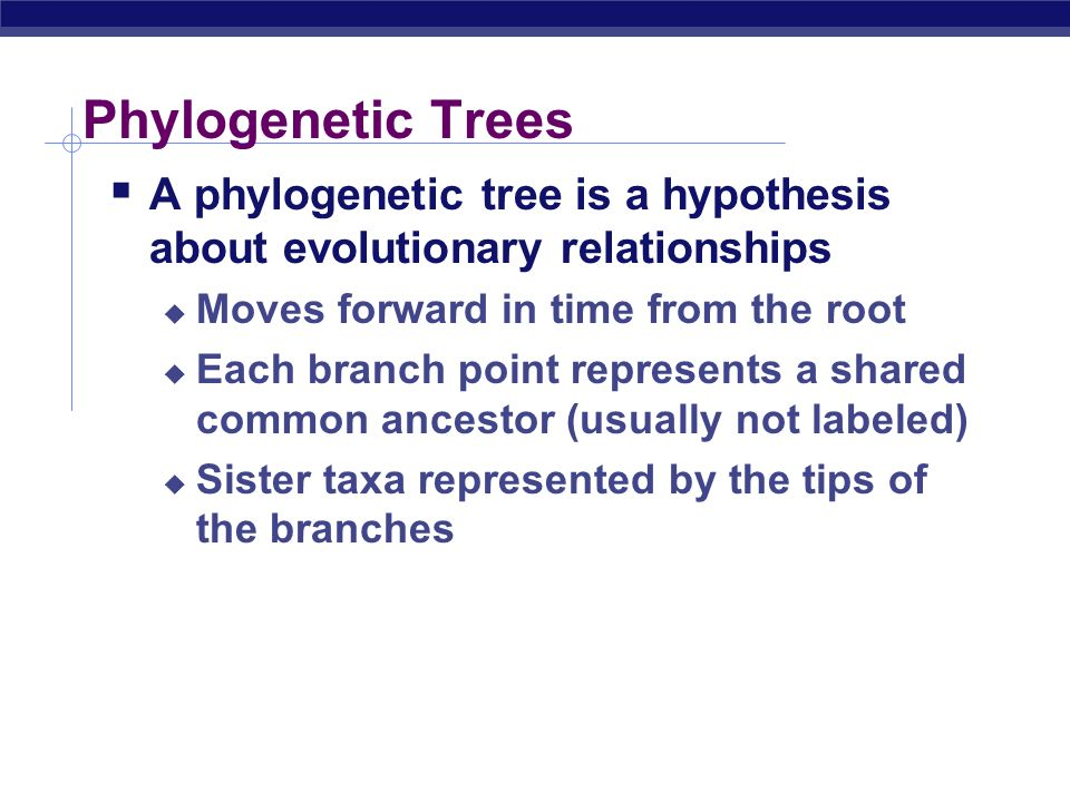 Phylogenetic Trees A phylogenetic tree is a hypothesis about evolutionary relationships. Moves forward in time from the root.